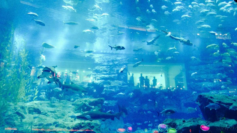 Visiter l'aquarium de Dubaï